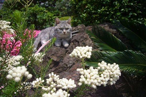 ミルと5月の花.jpg