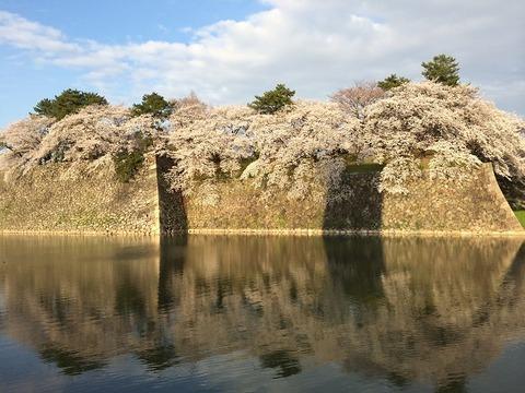 桜20-2