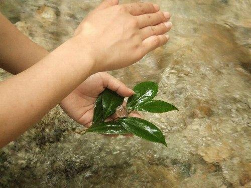 fairy水晶自然エネルルギー (10)