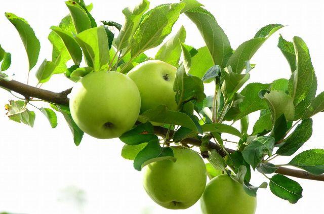 美しく青きリンゴ
