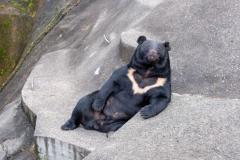 介護職員の40代女性がクマに襲われ大けが 施設の敷地内で 金沢