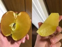 青森の「100%蜜りんご」がネットで話題に 「蜜が密に」海外からもコメント
