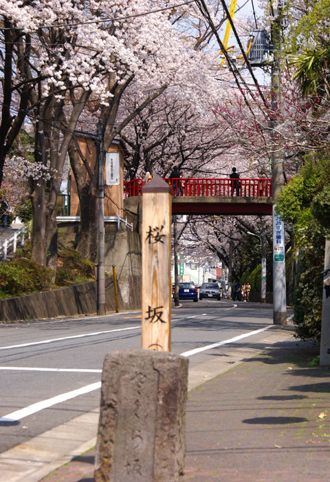 sakurazaka08032813