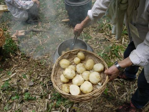 potato_01