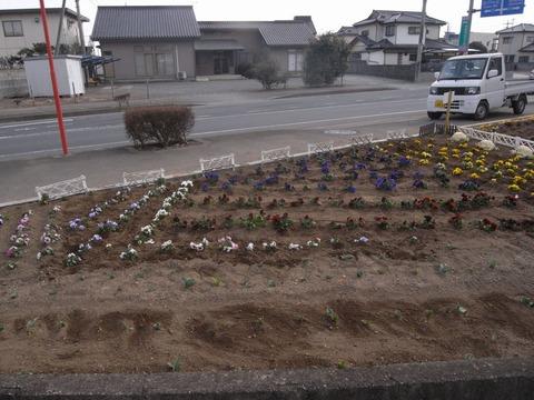 flower_03