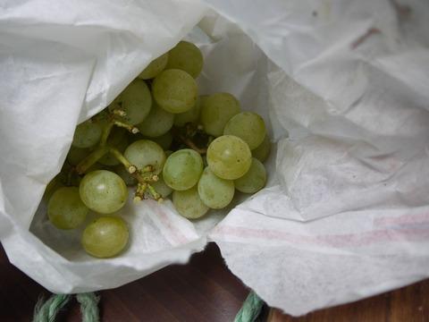 grapes_01