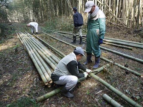 bamboo_12