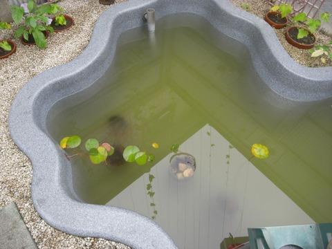 pond_03