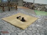 赤ちゃんパンダ | 不妊|鍼灸|大阪|卵子の質|鍼灸治療は三ツ川レディース鍼灸院