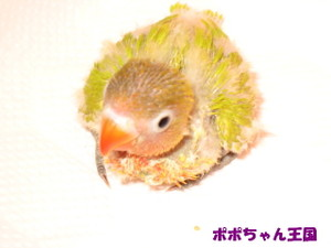 f9f48926.jpg