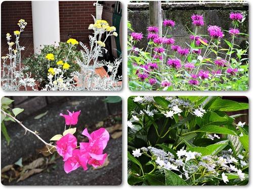至誠ホームの庭1