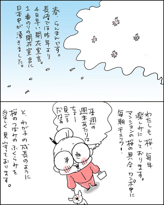 開花宣言1