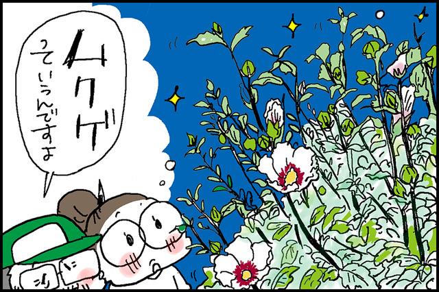 夏の花7a