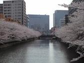 20110410桜1