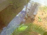 20090923水草