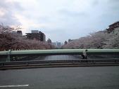 20100411桜
