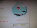 20090313僕の金魚