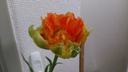 20150205花 (2)
