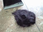 20101104髪の毛