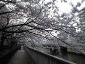 20110410桜2