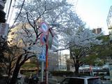 20080327桜