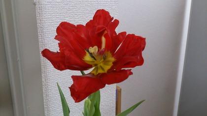20141228花 (1)