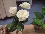20090710花�