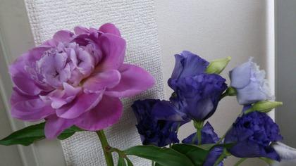 20140530サボテン・花 (2)