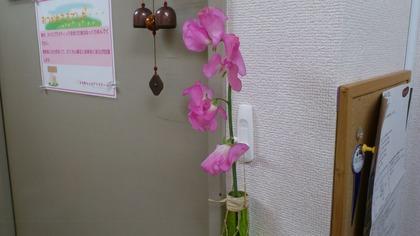 20130128花