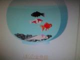20090315僕の金魚