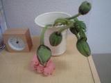 20090327花�