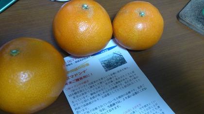 20141229いただきもの (4)