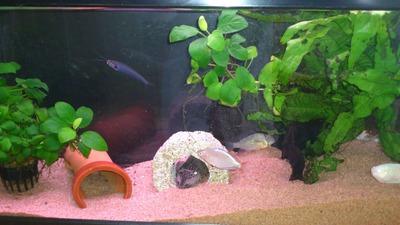 20110721熱帯魚