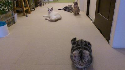20120201猫7
