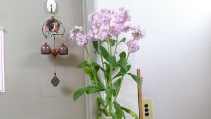20140216花