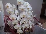 20090401花�