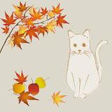 ちゃん紅葉と白猫