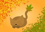 紅葉と猫ちゃん2