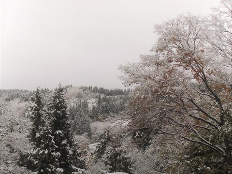 H29 初雪1