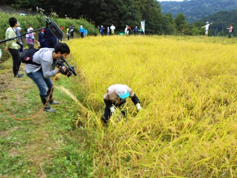 稲刈り指導