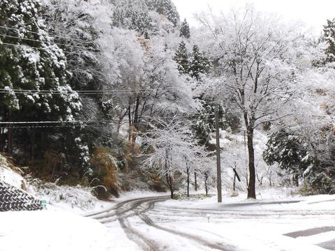 H29 初雪2
