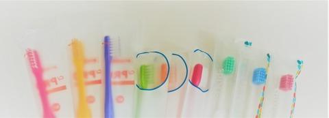 指導用歯ブラシ