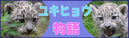 円山動物園 ユキヒョウ
