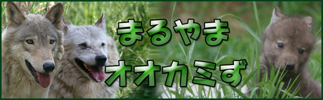 円山動物園 シンリンオオカミ