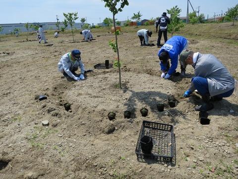 4チームに分かれて植栽。桜広場に約4,300本が植えられました。