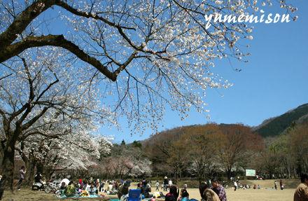 石川県林業試験場の樹木公園