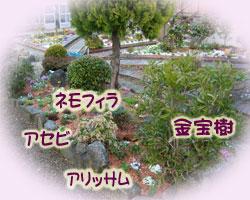 ネモフィラやアリッサムを植えました。