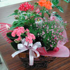 かすみ草の花セット