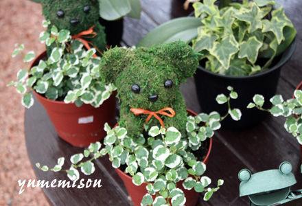 アニマルモスのプミラの鉢植え