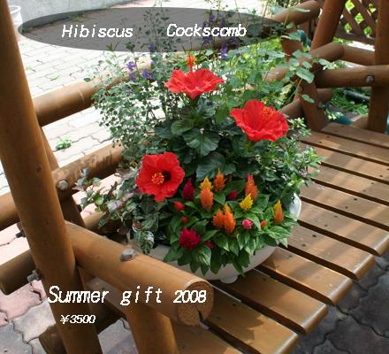 夏のギフトは、やっぱり夏の花を!